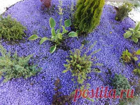 Ультрафиолетовая композиция с хвойными и вересковыми Фиолетовый очень неоднозначный цвет :с одной стороны - наполняет энергией, притягивает взгляд, а с другой – отталкивает своей сложностью и непонятностью. Разнообразные оттенки синего и фиолетового в саду зрительно увеличивают пространство, создают ощущение удаленности предмета.Все...