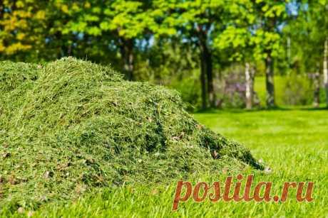 Что делать со скошенной травой