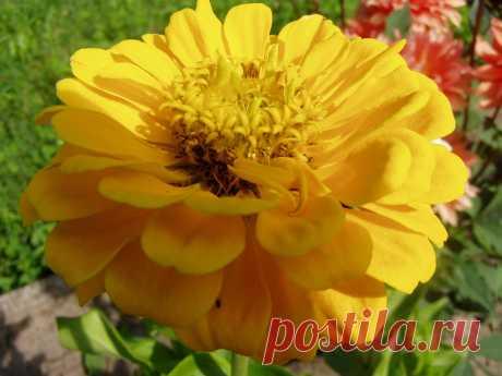 Фотографии Наш Мир - 1294 фото в Моем Мире.