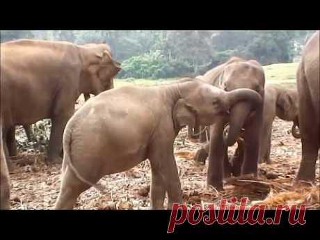 """Единственный в Мире """"детский дом"""" для слонов (видео-прогулка)"""