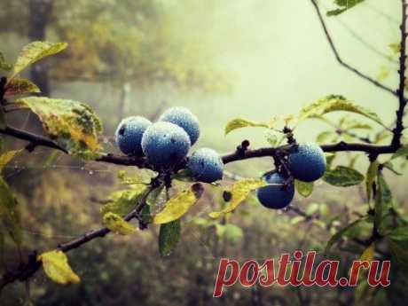 As well as than to feed up blueberry in the spring and in the fall, including garden