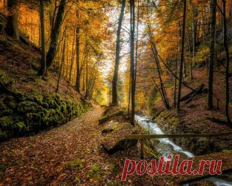 Картинки швейцария, осень, лес, ручей, деревья, листья, природа - обои 1280x1024, картинка №435581