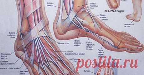 Упражнения, которые возобновляют все обменные процессы в крови и лимфе Читать далее...