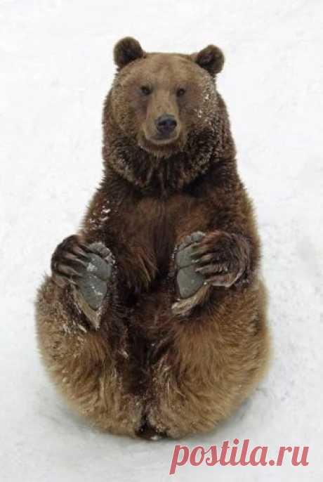 Альбом– Google+ Фотограф Дункан Ашер (Duncan Usher) заснял как в Баварии в парке дикой природы на склоне горы два бурых медведя весело скатывались с заледеневшего снежного наста, словно дети