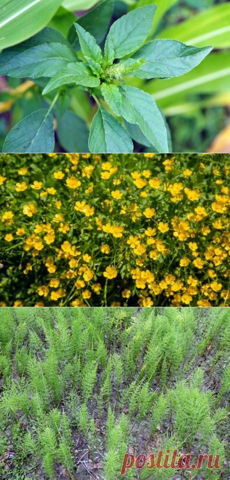 О чем говорят сорняки? Определяем особенности почвы по растениям