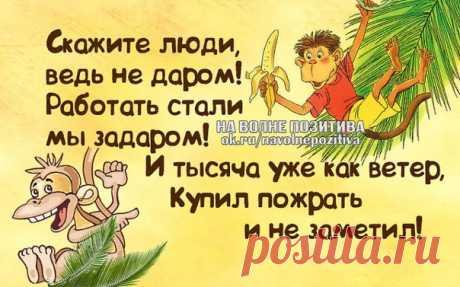 Тома Елина