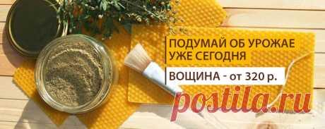 Русское Пчеловодство - Главная
