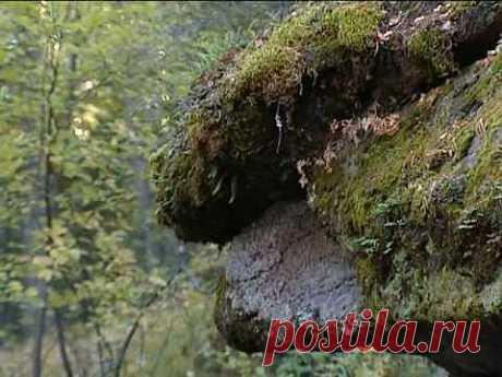 7 чудес Красноярского края: Столбы - YouTube