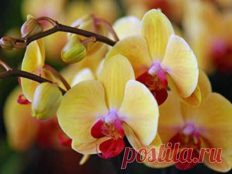 Как поливать орхидею зимой. Уход за цветком - На усадьбе | Блог про садоводство