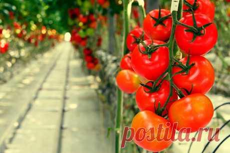 Свежие овощи круглый год из своей теплицы за 5000 рублей