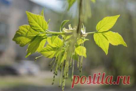 Весенние листья