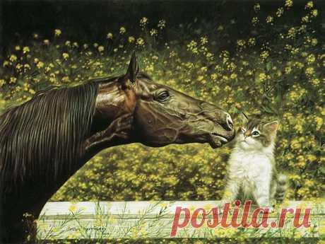 Грация и восхитительная красота лошадей