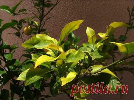 25 проблем комнатных растений, которые можно определить по листьям. Описание, фото — Ботаничка.ru