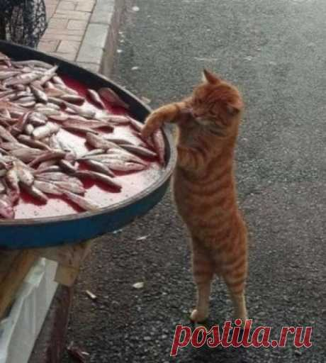 А свежая рыба есть?!