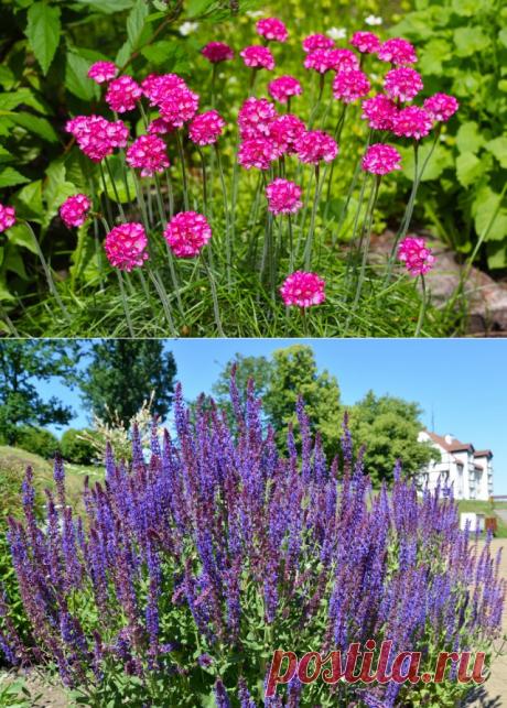 15 многолетников, которые цветут все лето | Прочие многолетники (Огород.ru)