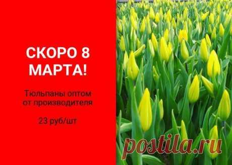 Успей выбрать самые сочные цветы Тюльпаны оптом от производителя Огромное количество цветов в наличии Широкий ассортимент Возможность осмотра цветов Доставка, все виды оплаты Звони 906 317 09 29 Евгений Пиши