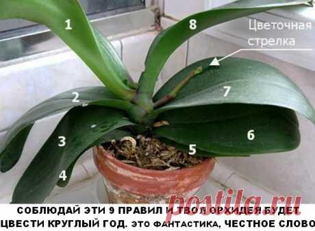 Соблюдай эти 9 правил и твоя орхидея будет цвести круглый год. - Все своими руками