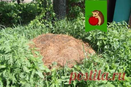 Как уничтожить муравейник на даче простыми народными методами | садоёж | Яндекс Дзен