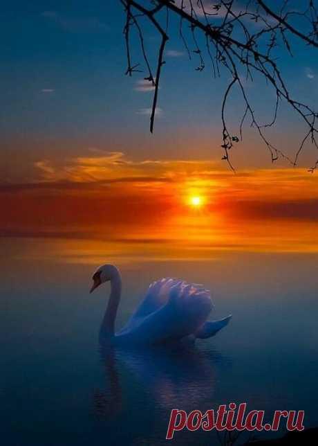 ༺🌸༻Пусть покрывалом звёздным ночь укроет,  Поможет позабыть тревоги дня,  Заботы отодвинет, успокоит,  Сны добрые, чудесные даря.