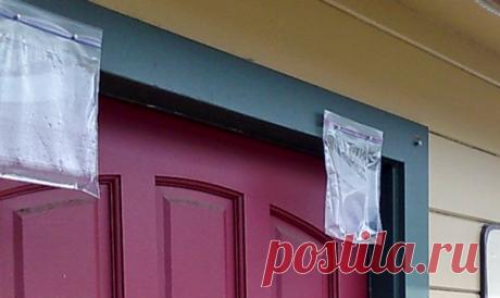 Соседи повесили пакет с водой над дверью, решил спросить у них для чего это   Случай из жизни   Яндекс Дзен