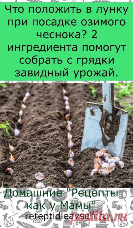 Что положить в лунку при посадке озимого чеснока? 2 ингредиента помогут собрать с грядки завидный урожай.