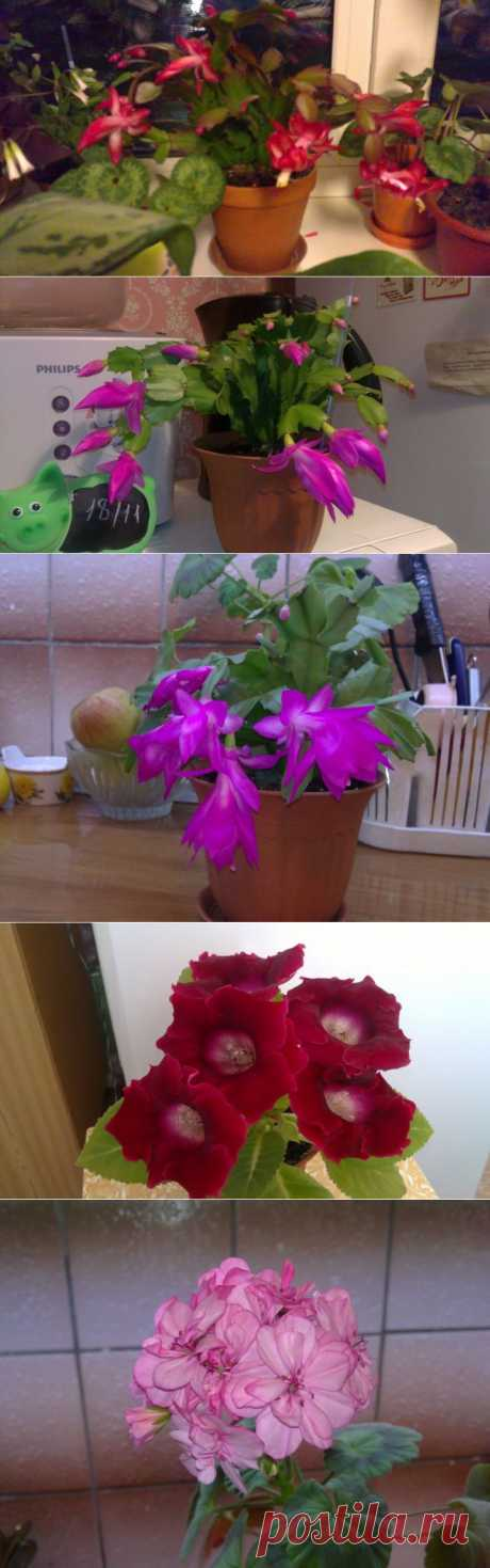 Немного любимых цветочков | САД НА ПОДОКОННИКЕ