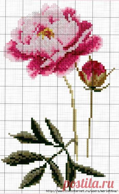 Вышитые цветы, Пион крестом, Схемы вышивания