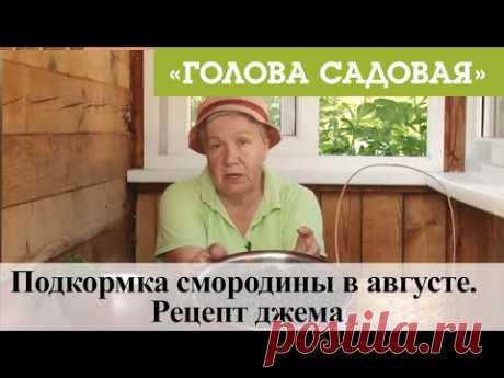 Голова садовая - Подкормка смородины в августе. Рецепт джема