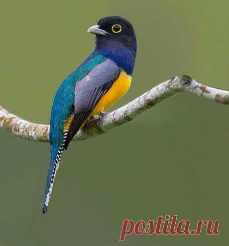 19 расписных птиц неземной красоты, о существовании которых вы даже не знали