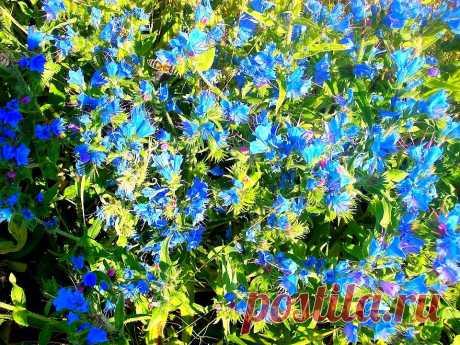 Нежные голубые цветочки!