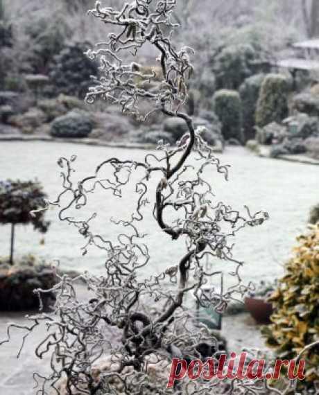Идеи зимнего сада. Декоративные деревья ~ ALL-DEKOR