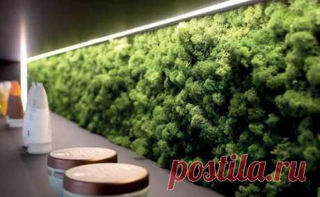 Как стабилизировать мох в домашних условиях, разновидности природного материала, способы его сохранения в естественном виде - 11 фото