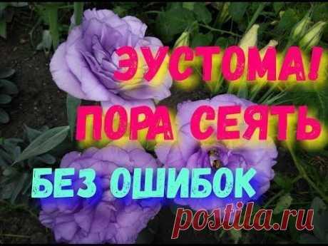(2242) Pinterest
