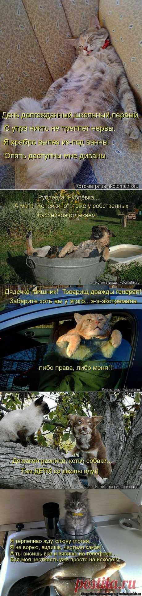 Все. Нафиг политику. Отвлекитесь))) | ОБОРЖАКА ;)