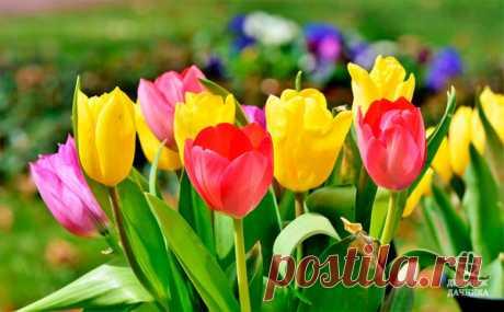 Тюльпаны показали первые ростки? Пора их подкормить! | Блоги о даче и огороде, рецептах, красоте и правильном питании, рыбалке, ремонте и интерьере