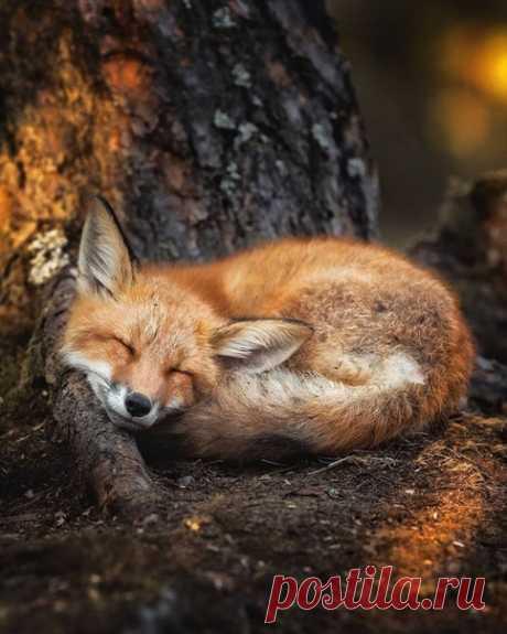 Доброй ночи. Самых ярких и приятных снов