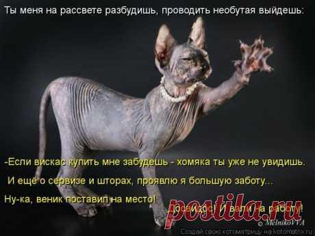 "Весёлая ""ЗВЕРОКОТОМАТРИЦА"""