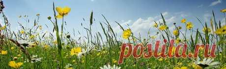 Травы для снижения аппетита Лекарственные травы для борьбы с аппетитом. 27 мощных трав для уменьшения аппетита и похудения. Пчелиная пыльца, мята, подорожник, боярышник, морские водоросли...