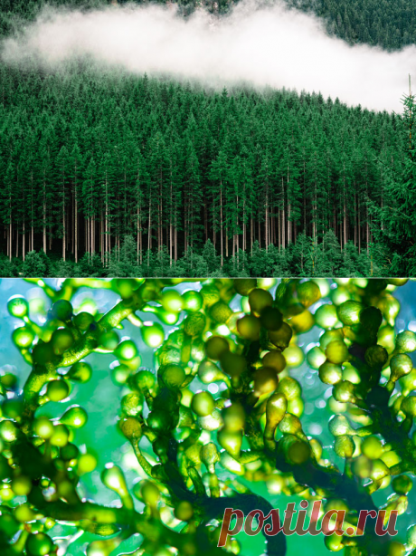 Откуда берётся кислород на нашей планете на самом деле