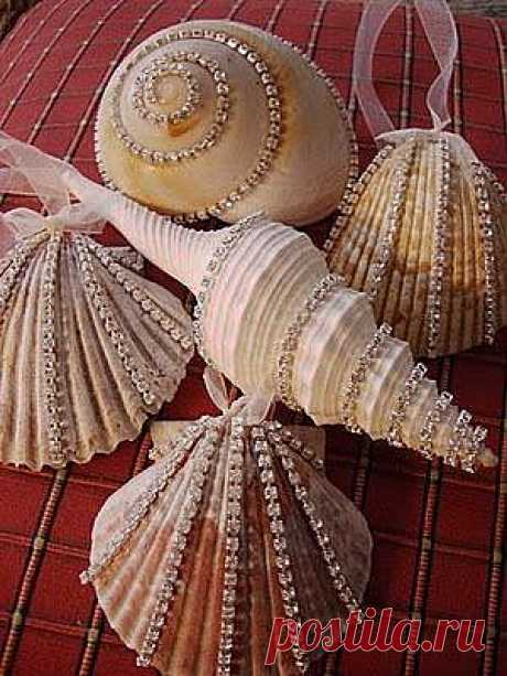Susan Ashby приколол(а) это к доске Seashells and sea creatures   Pin…