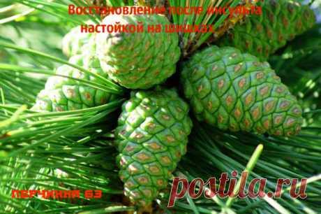 Сосновые шишки спасают от инсульта - Perchinka63