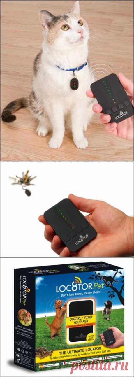 позвоните на... кота! Теперь это возможно :)
