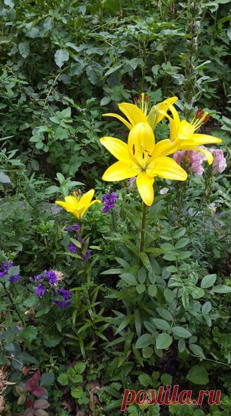 ԾԱՂԻԿ-իմ ծաղկանոցից🎋 Բնության ստեղծած ամենազվարթ ու ամենահաճելի, գլխավոր բարիքներից մեկը ծաղիկն է: Հակառակ իր փափուկ ու վաղանցիկ վիճակին, ուրախության նշանակ է, ամեն մի նվիրական հանդիսության պատվի ու սիրո գլխավոր զարդն է:Այդ տեսությամբ չի արգելվում, որ ծաղիկը եկեղեցու մեջ էլ ընդունվի իբրև տոնական նշանակ :