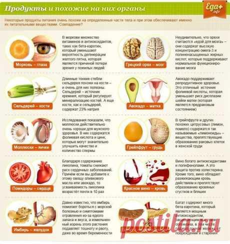 Еда для органов в картинках