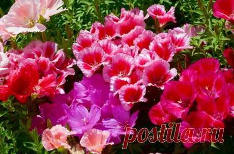 Какие цветы подойдут для подзимнего посева - Огород, сад, балкон - медиаплатформа МирТесен