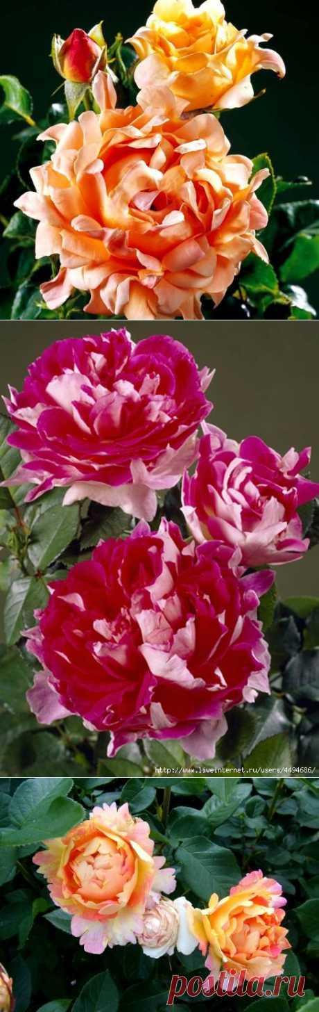 Бесподобные кружевные розы!