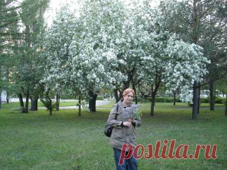Оля Шипицина