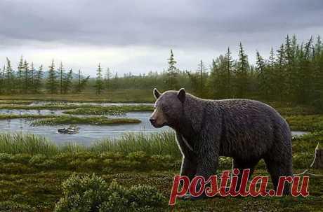 Он жил 3,5 млн лет назад и очень любил сладкое, что отразилось на состоянии зубов. Североамериканские ученые опубликовали результаты изучения костей предка медведя, чьи кости были обнаружены в торфяных отложениях в Канаде.