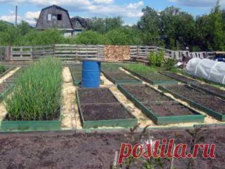 Что посадить после чеснока летом и осенью Озимый чеснок убран. Грядка освободилась. Чем занять свободное пространство летом, чтобы была польза и для земли, и для владельцев участка.