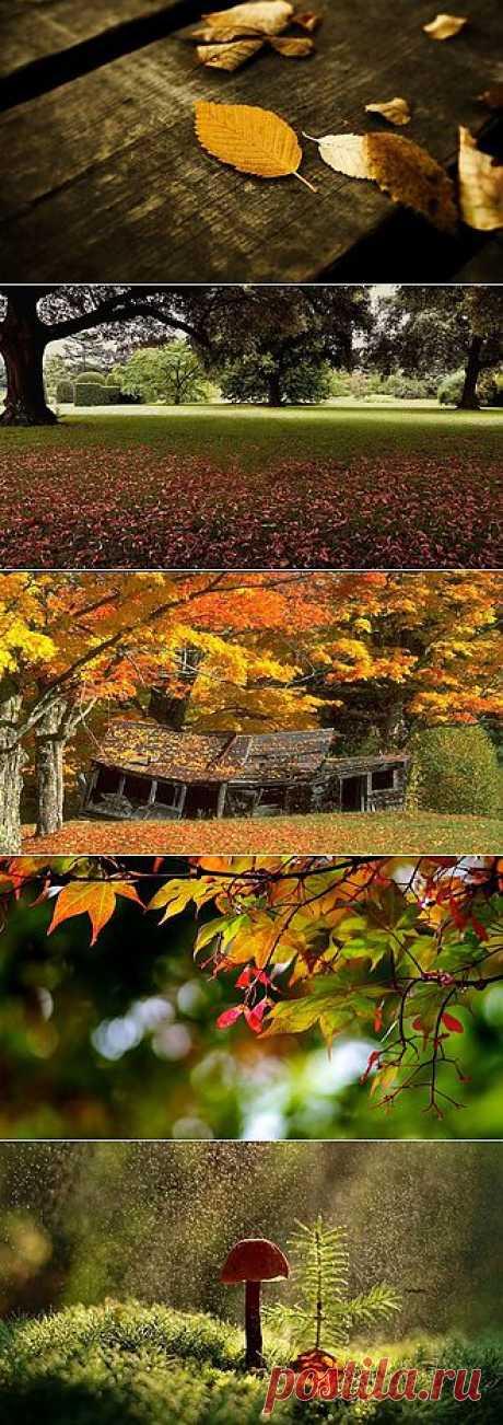обои,осень
